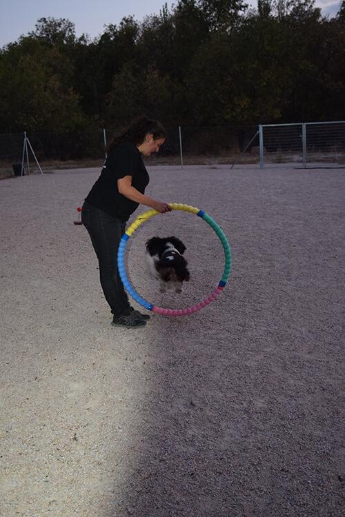 escuela adiestramiento canino